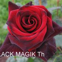 ЧГ-027: Black Magic (Black Magic)