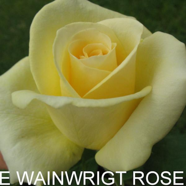 ЧГ-224: WNWRT 2L (The Wainwright Rose)